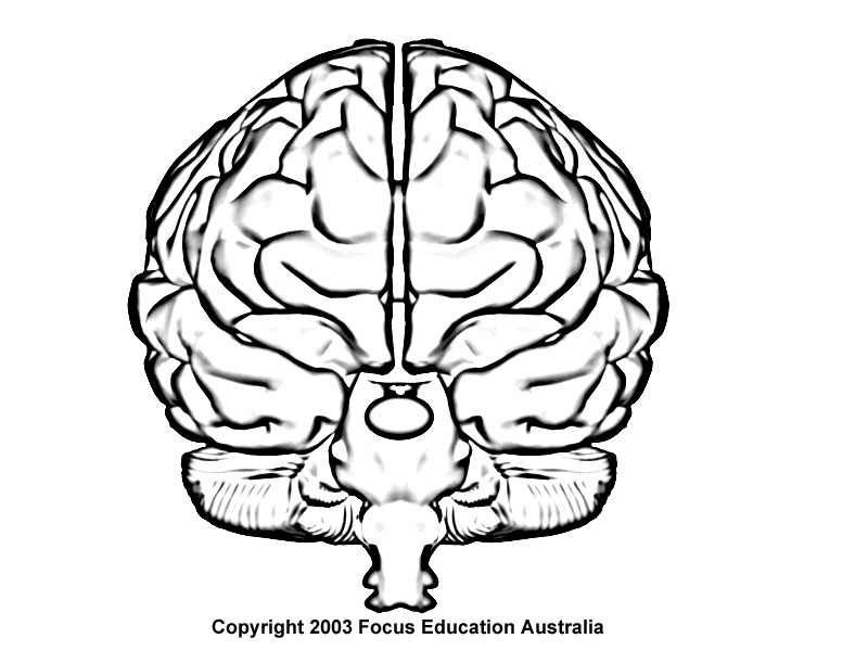 brain drawing images at getdrawings com