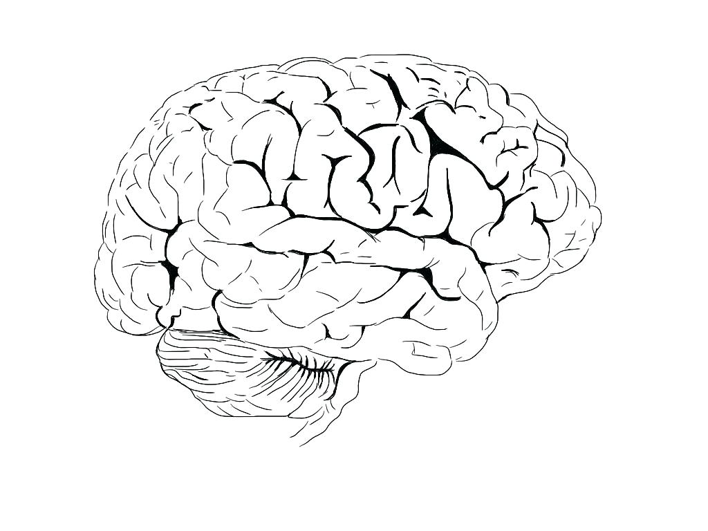 Brain Drawing Images at GetDrawings.com | Free for personal use ...