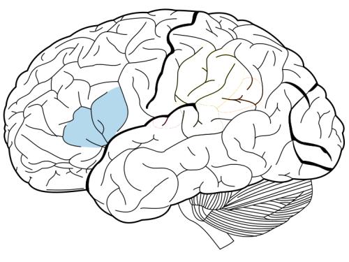 500x375 Lo Scheiner Are Language Areas In The Brain Prerequisite