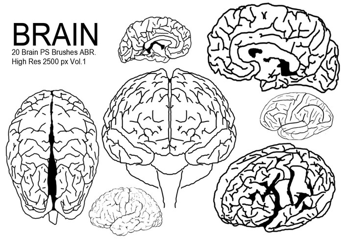 brain line drawing at getdrawingscom free for personal