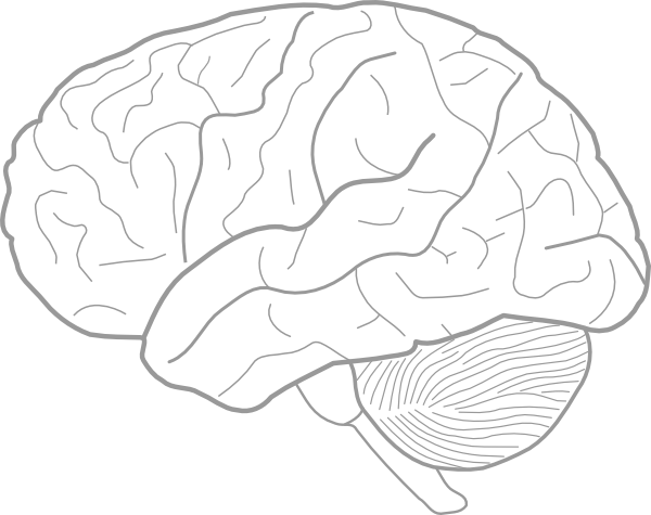 Brain line drawing at getdrawings free for personal use brain 600x475 brain sketch clip art ccuart Image collections