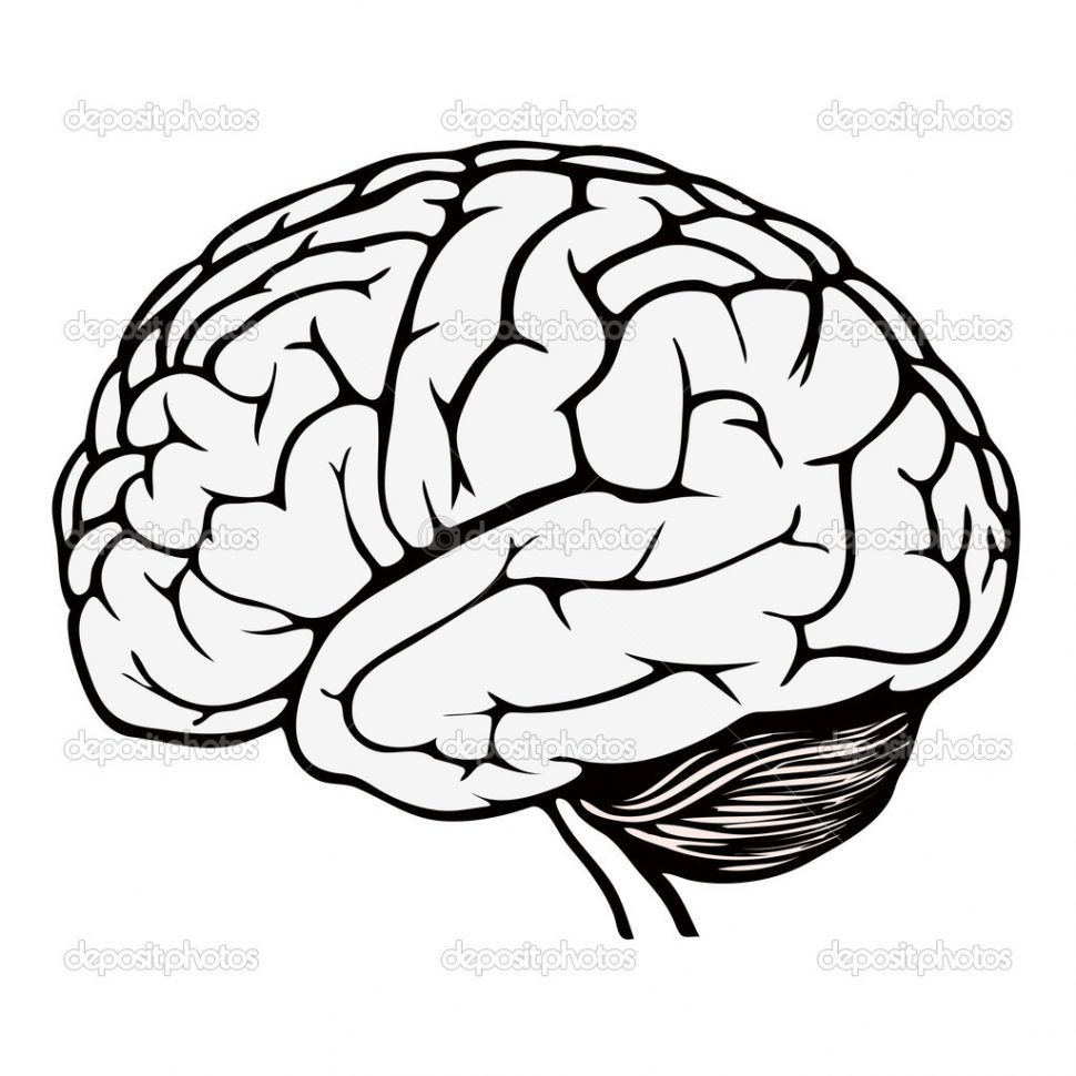 970x970 Coloring Brain Coloring Pages Page Neuroanatomy Bookneuroanatomy