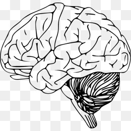 260x260 Hand Drawn Brain Png Images Vectors And Psd Files Free