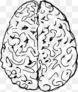 260x307 Hand Drawn Brain, Brains, Brain Dong, The Human Brain Png Image