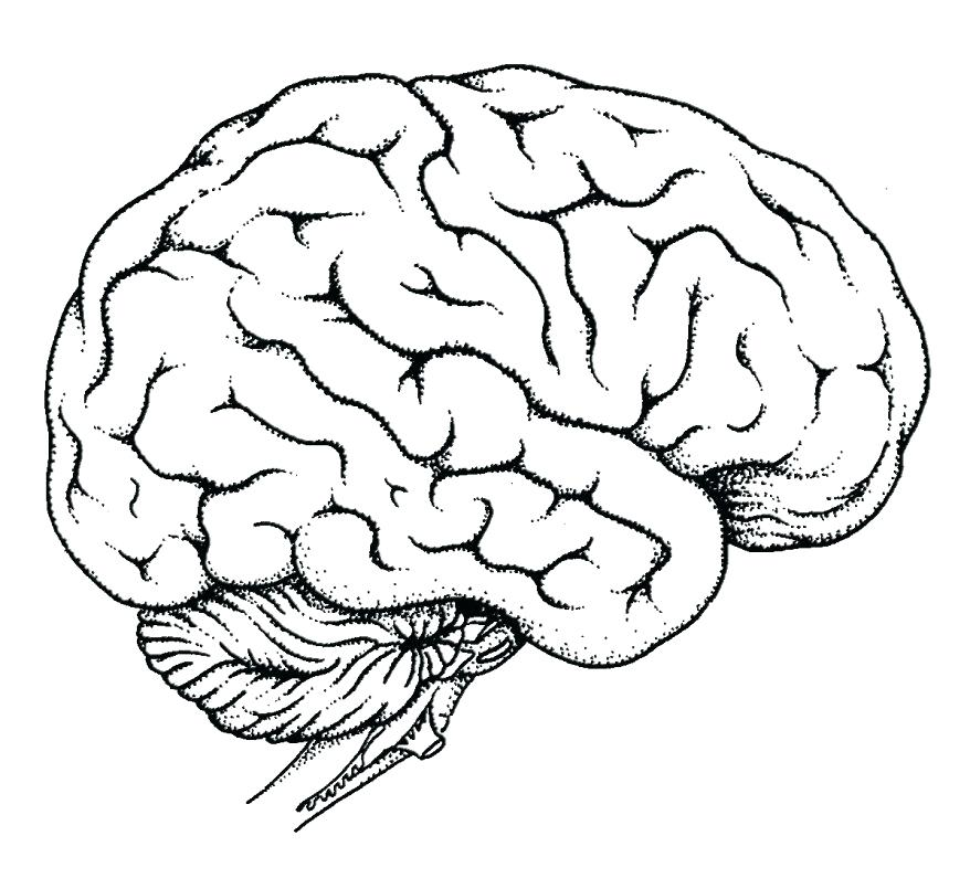 878x805 Brain Anatomy Coloring Pages Anatomy Coloring Pages Anatomy