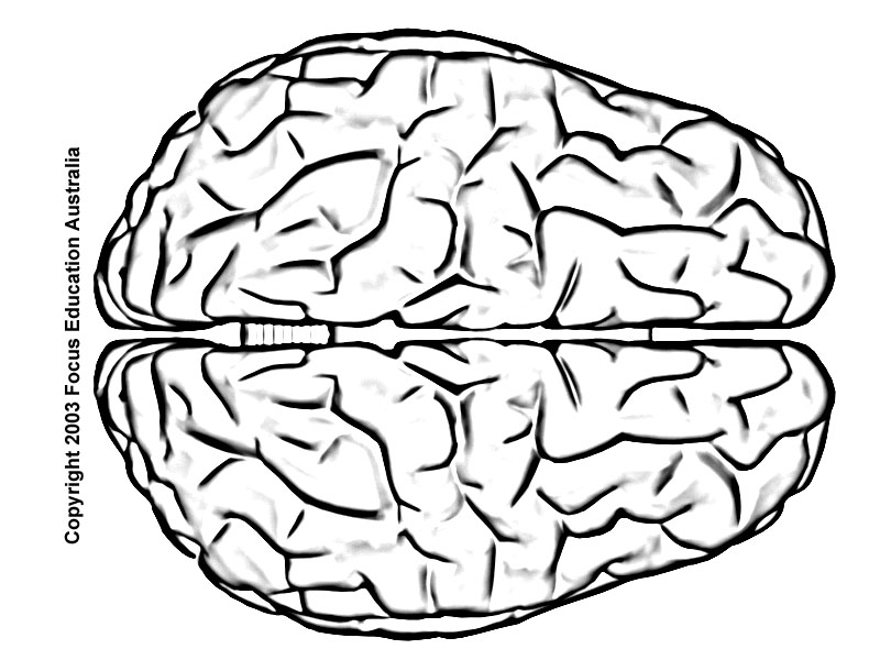 Brain Line Drawing At Getdrawings Free For Personal Use Brain