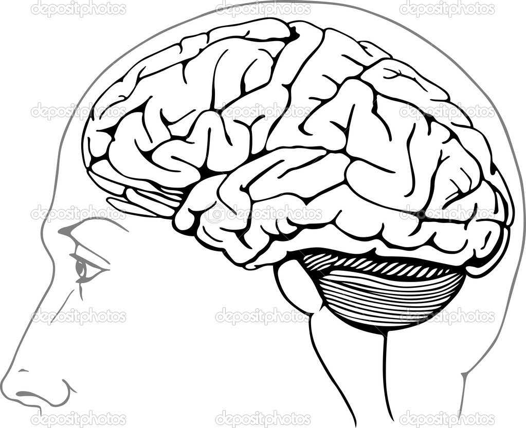 1023x833 Brain Coloring Pages