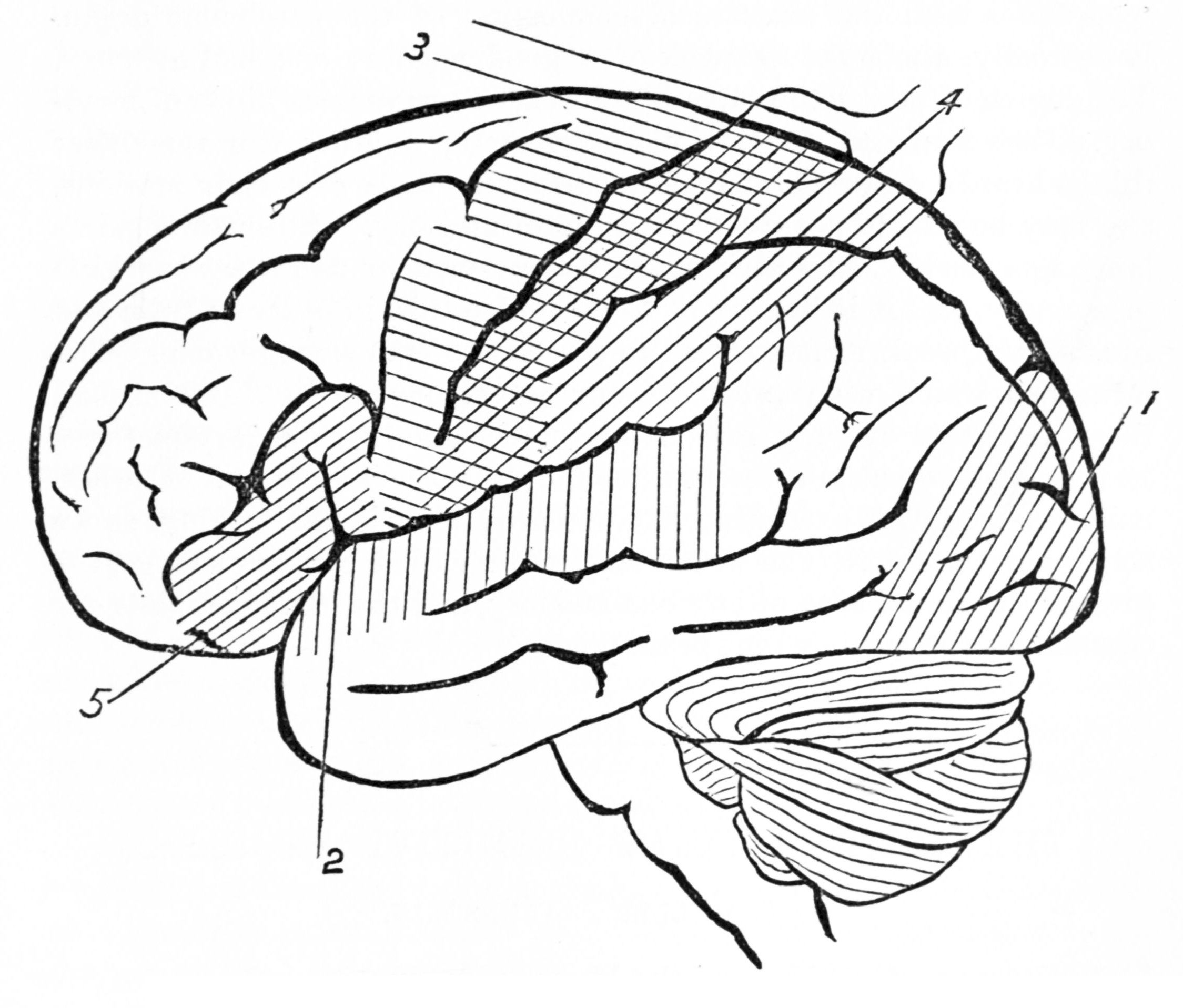 2249x1917 Brain Drawing Outline