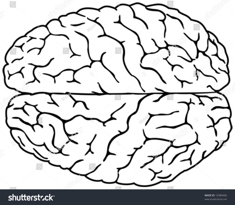 1500x1309 Brain Drawing Simple Simple Brain Drawing Cartoon Brain Outline