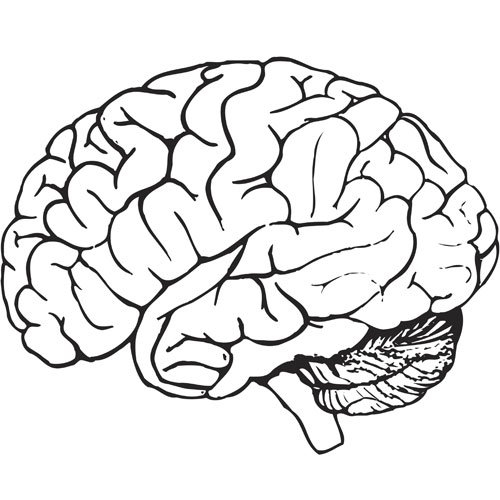 Brain Outline Drawing at GetDrawings.com | Free for ...