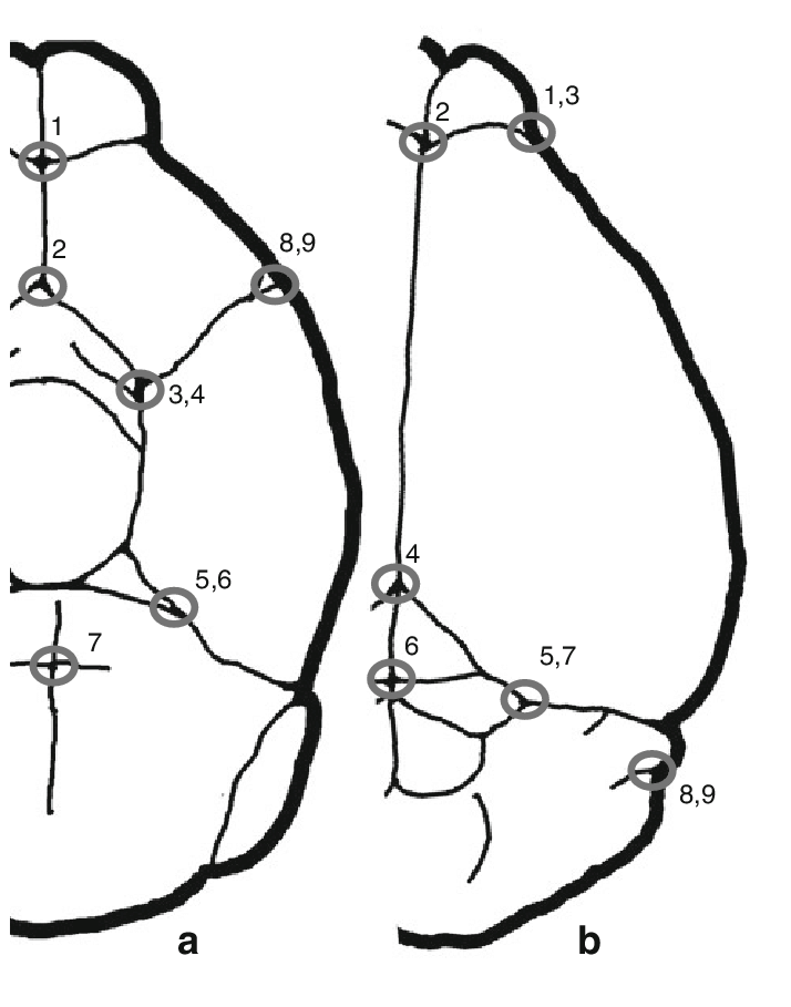 brain outline drawing at getdrawings com free for personal use