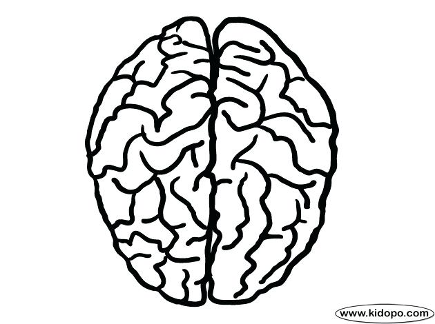 It is a picture of Tactueux brain coloring pages