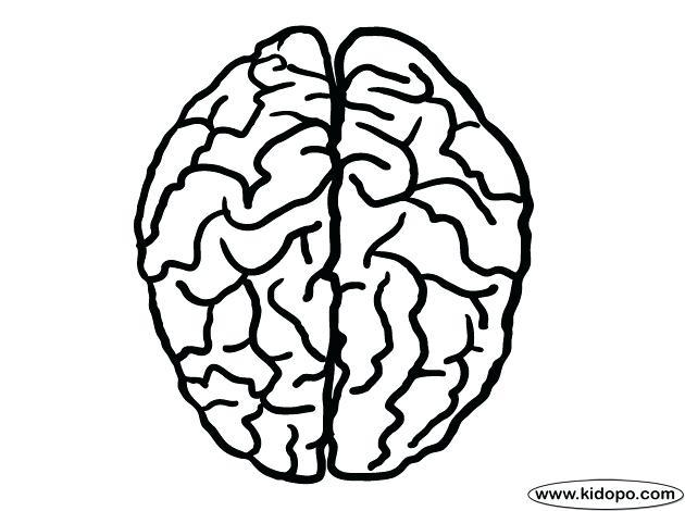 brain pencil drawing at getdrawings com