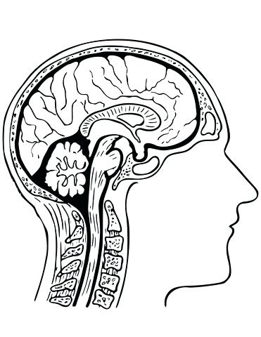 371x480 Amazing Brain Coloring Page New Drawn Brains Pencil And In Color