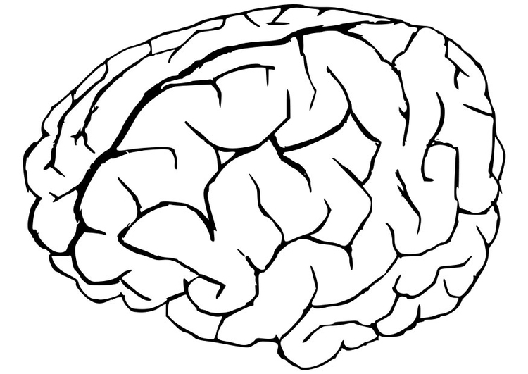 750x531 Coloring Page Brain