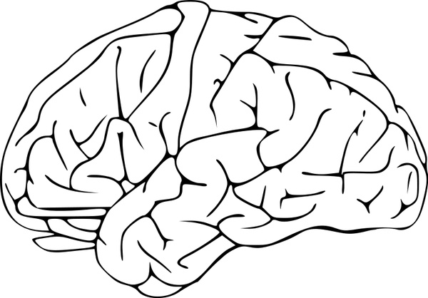 600x418 Brain 03 Free Vector In Open Office Drawing Svg ( Svg ) Vector