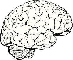 236x193 Simple Drawing Of Brain Brain Clipartsco Art Reference