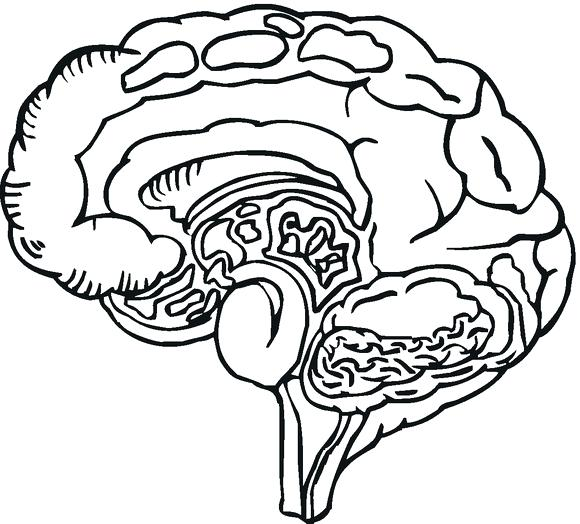 580x524 Brain Anatomy Coloring Pages Omnitutor.co