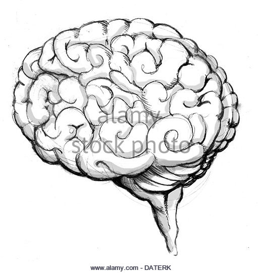 520x540 Brain Drawing Stock Photos Amp Brain Drawing Stock Images