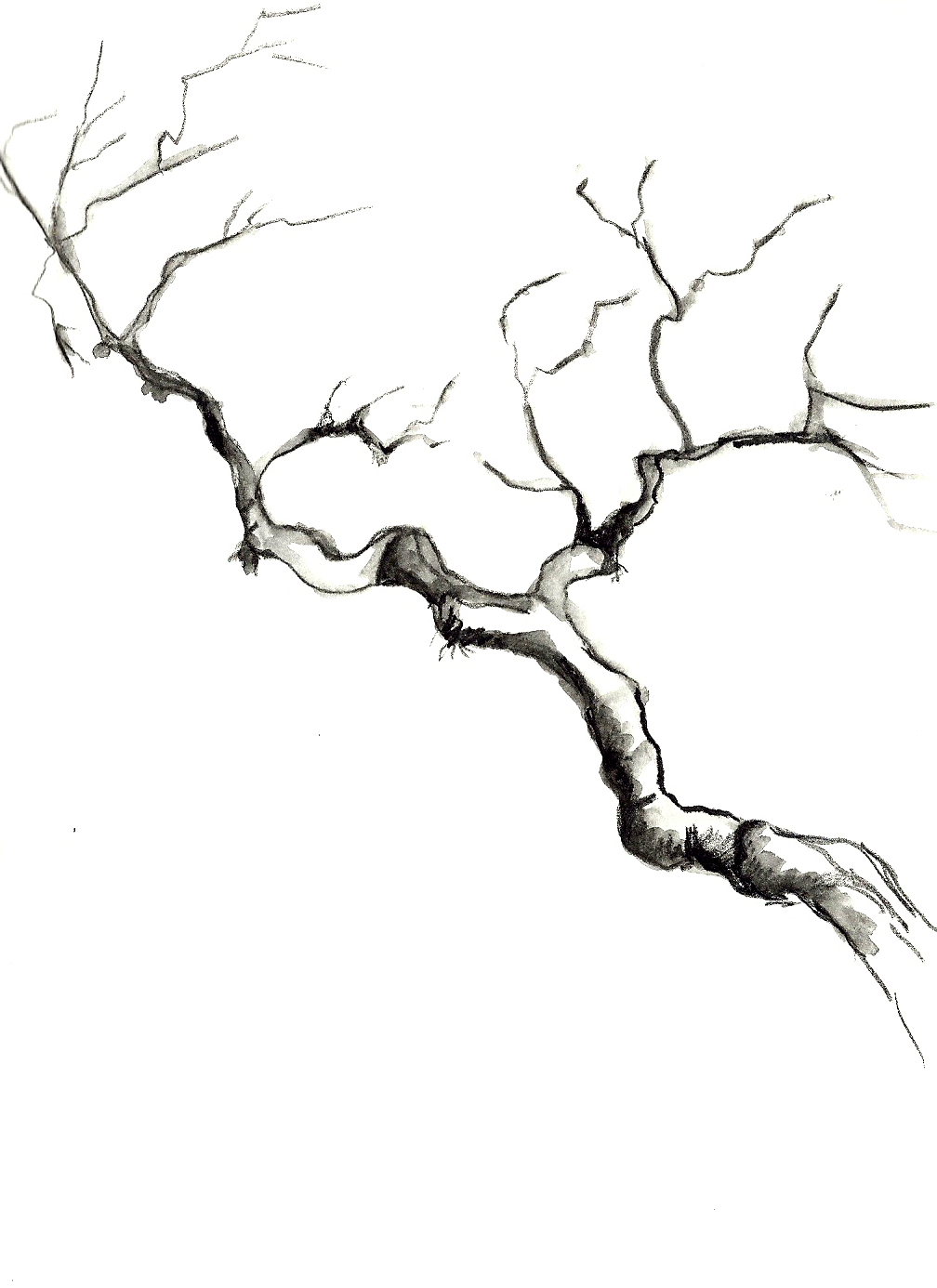 1008x1386 Drawing Of A Branch How To Draw Trees Curving Branches