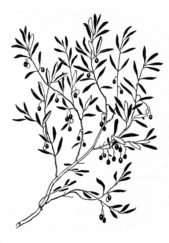 575x827 Flower Sketches