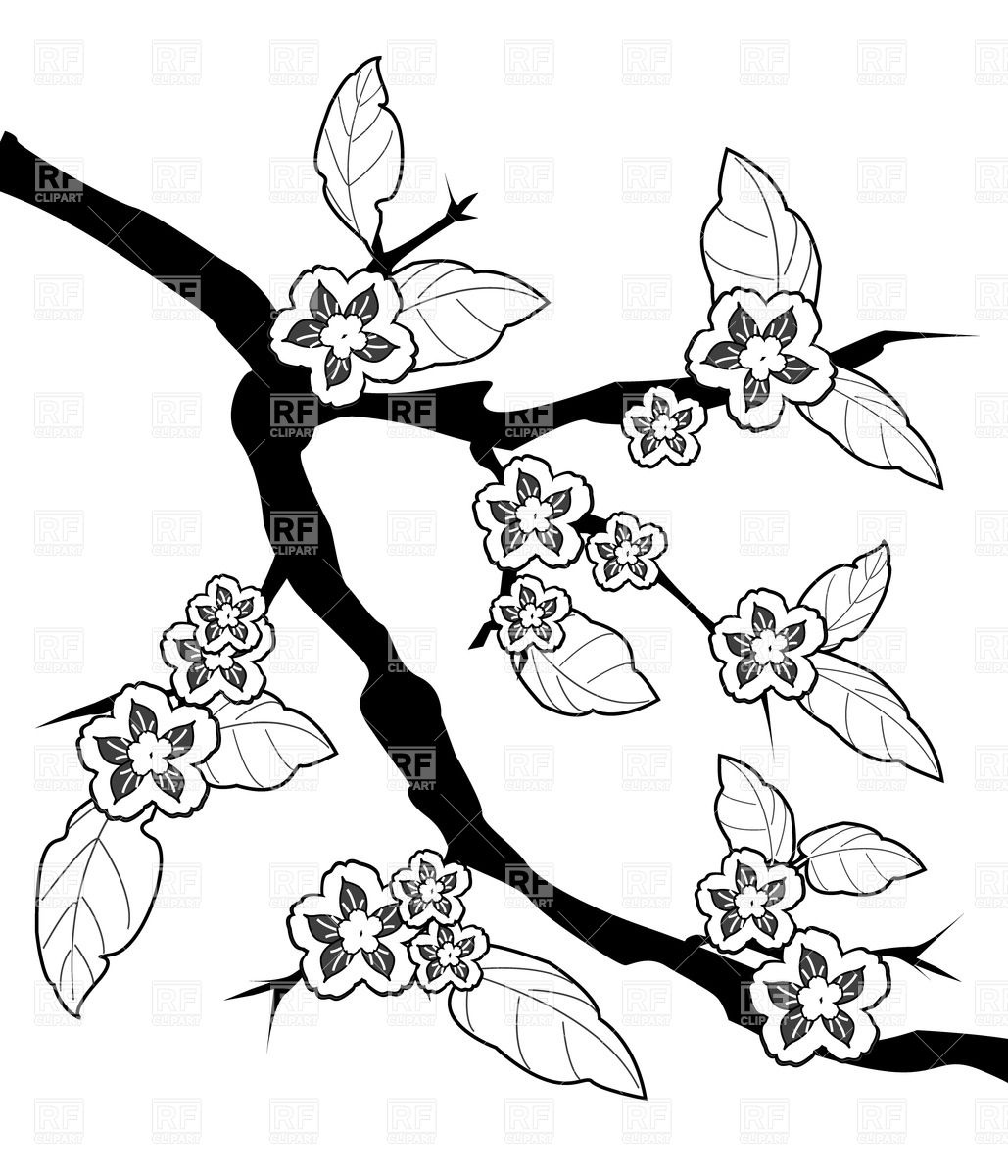 1029x1200 Sakura Branch And Flowers, Sketch Drawing Royalty Free Vector Clip