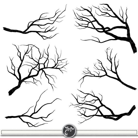 570x570 Tree Branch Drawing Art Drawings, Paintings
