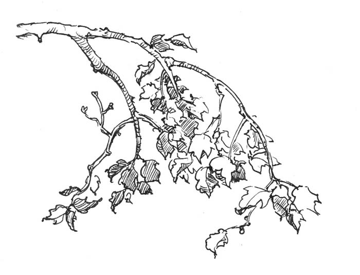 700x535 Branch New Tattoo Drawing Trees, Ink Drawings