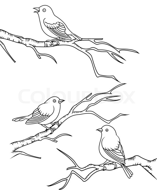 656x800 Bird Sitting On A Branch Stock Vector Colourbox