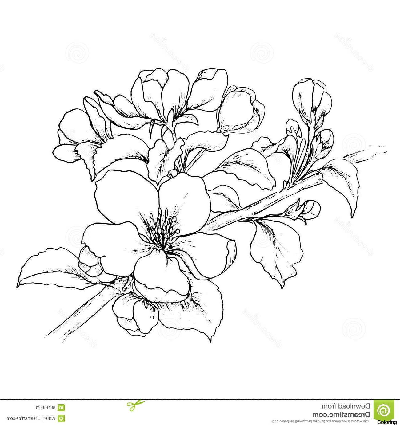1300x1390 Cherry Blossom Flower Branch Drawing Hand Drawn Of Stock Vector
