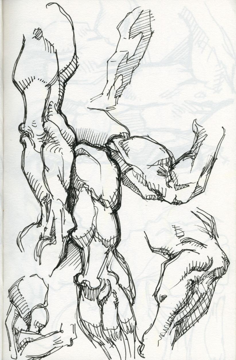 Book bridgman anatomy