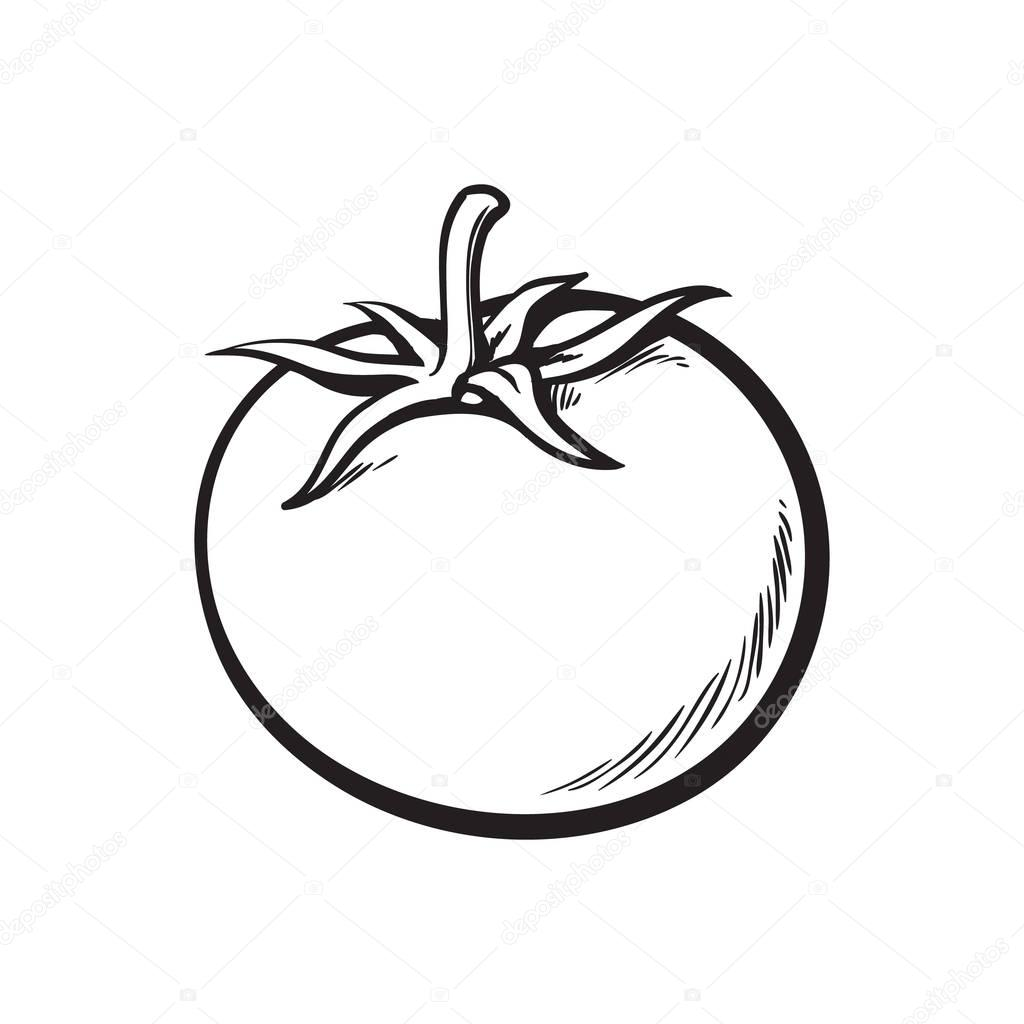 1024x1024 Sketch Style Drawing Of Shiny Ripe Tomato Stock Vector
