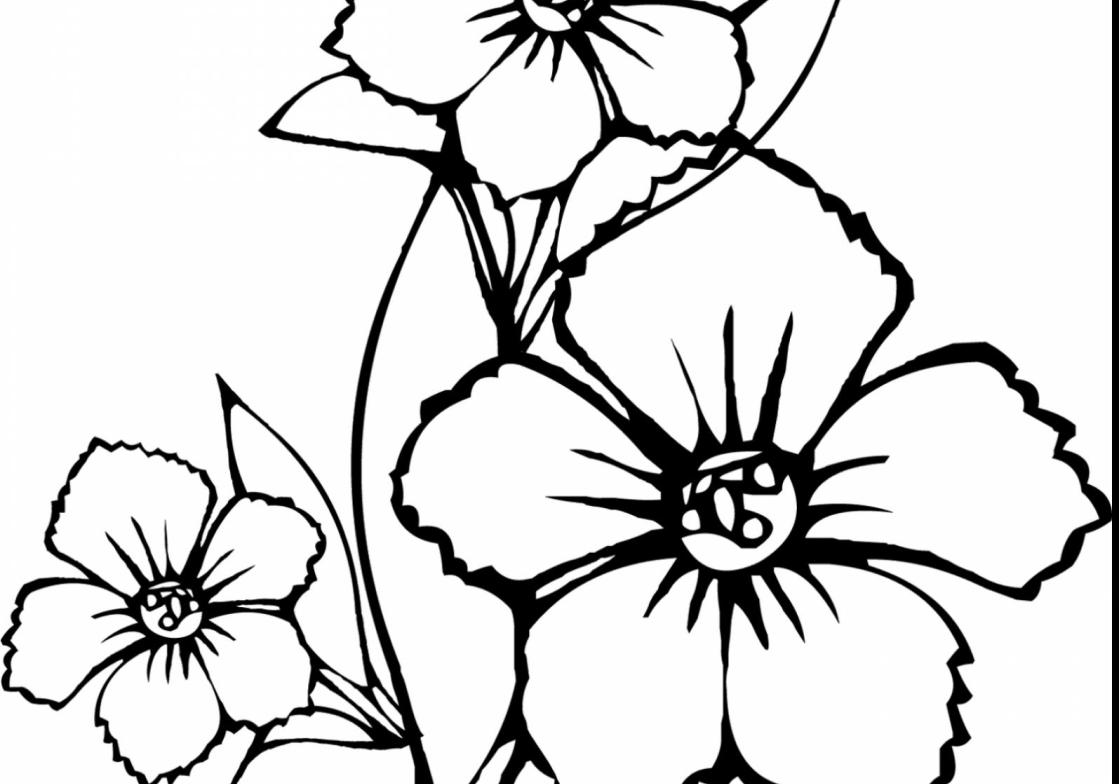 1119x784 Vase Wonderful How To Draw Flower Coloring Page With Hawaiian