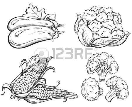 450x364 16,563 Eggplant Brinjal Stock Vector Illustration And Royalty Free
