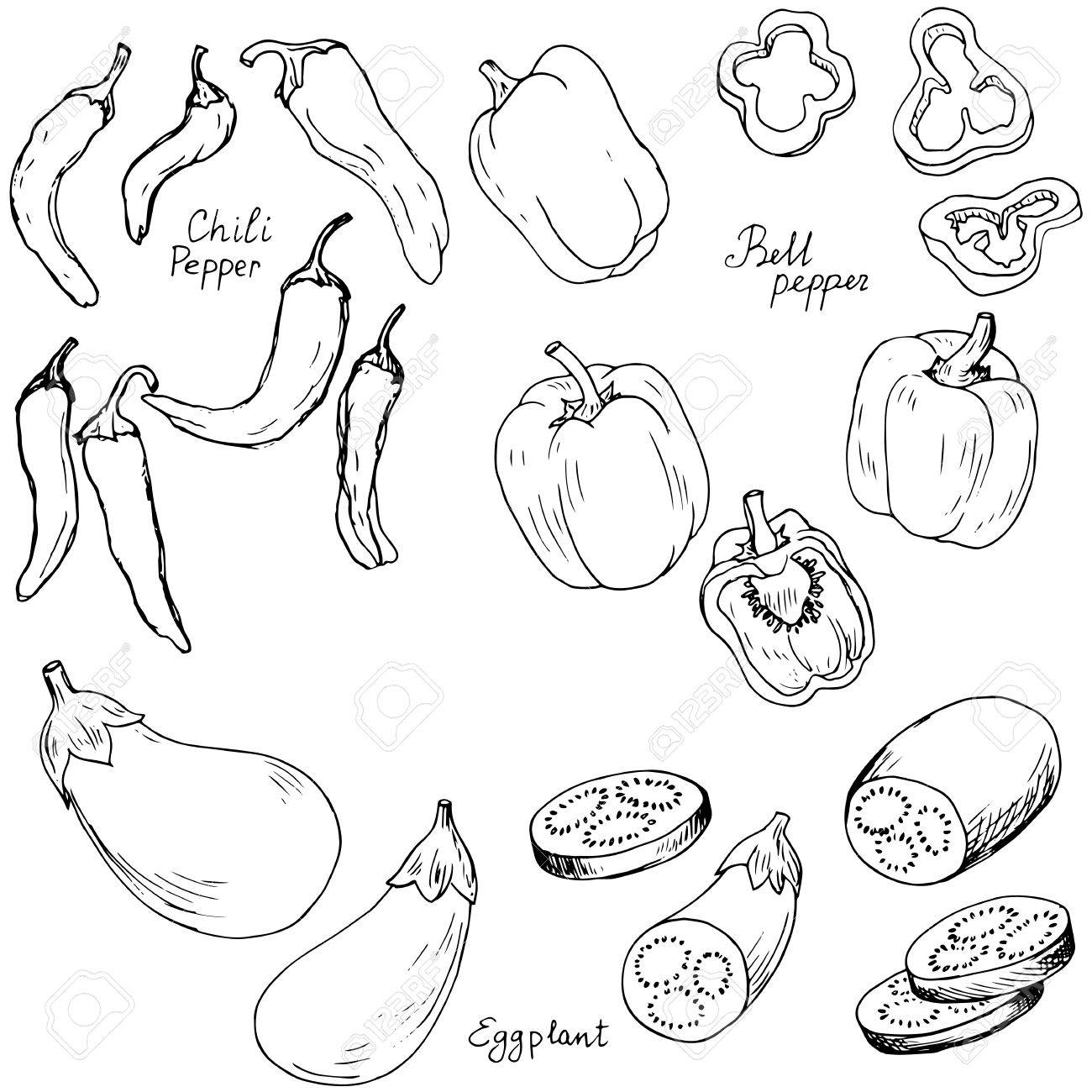 1300x1300 Hand Drawn Vegetables,bell Pepper,chili Pepper And Eggplant