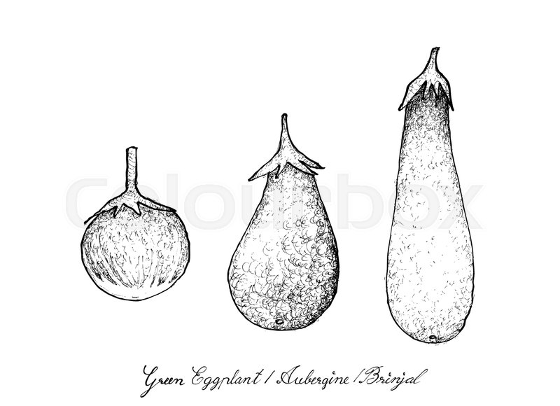 800x580 Vegetable And Herb, Illustration Of Hand Drawn Sketch Delicious