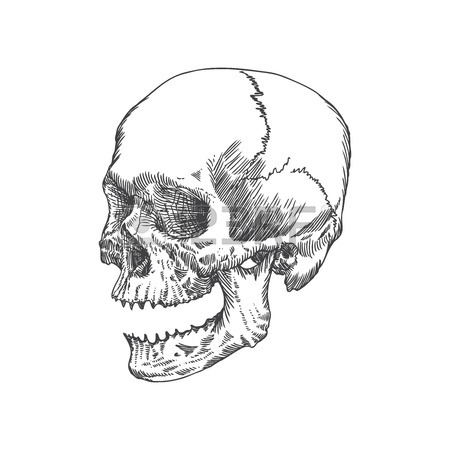450x450 Cracked Skull Images Amp Stock Pictures. Royalty Free Cracked Skull