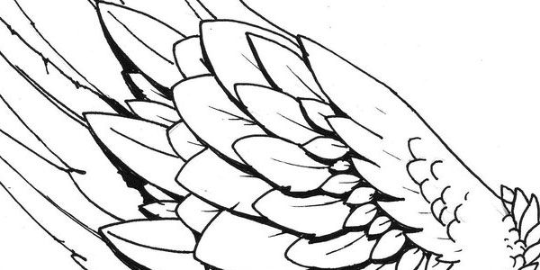 Broken Wing Drawing