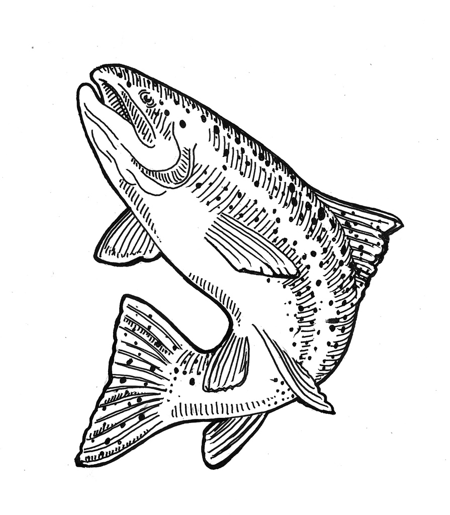 Brook trout drawing at getdrawings free for personal use brook 895x1024 the world39s best photos of drawing and trout freerunsca Images
