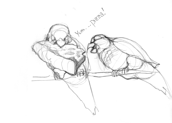 602x432 First Look Sketches Of The Brooklyn Parrots Walking In Public