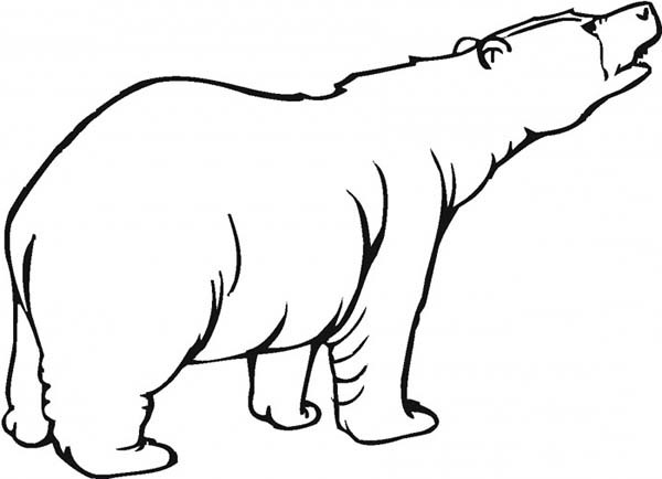600x434 Brown Bear Roaring Coloring Pages Best Place To Color