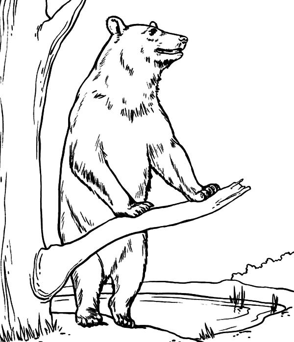 600x699 Brown Bear Standing Beside A Tree Coloring Pages Best Place To Color