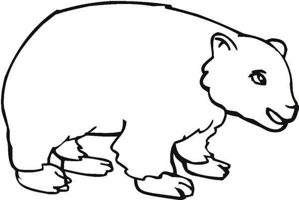 600x402 Drawing Brown Bear Coloring Pages Best Place To Color