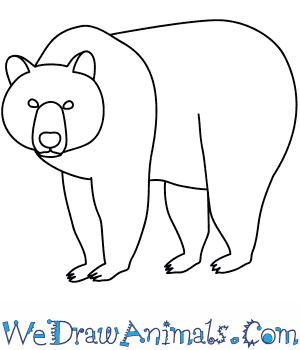 300x350 How To Draw A Brown Bear