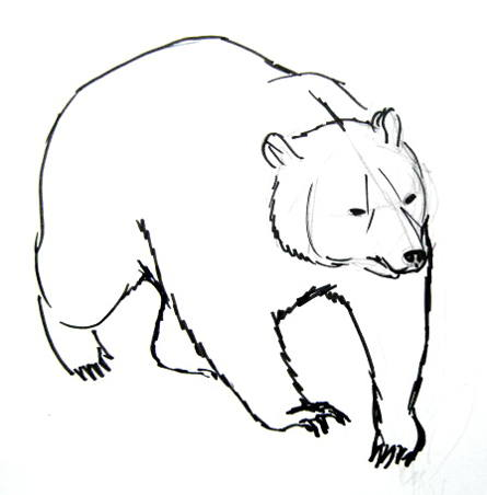 445x452 How To Draw A Brown Bear