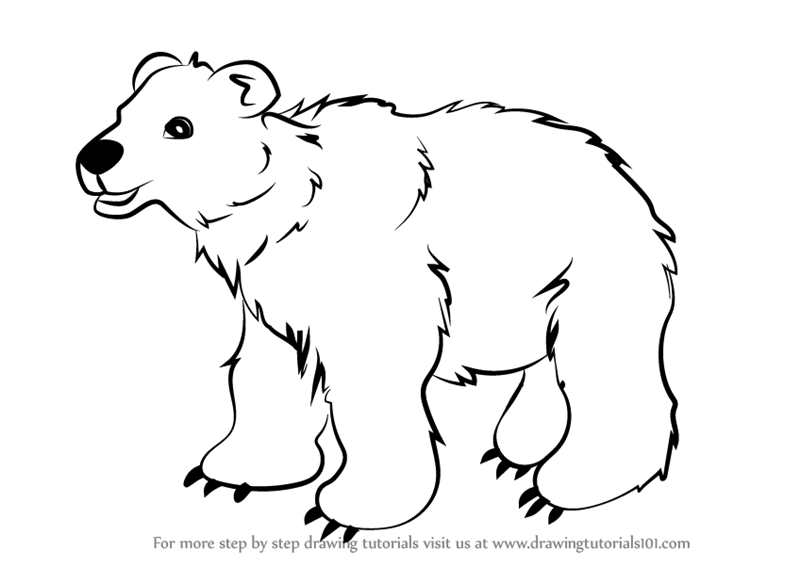 800x567 Learn How To Draw Brown Bear For Kids (Animals For Kids) Step By