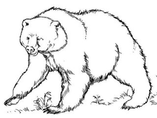 320x240 Brown Bear Coloring Sheet Free To Download
