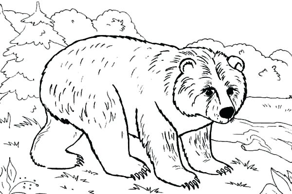 600x399 Brown Bear Coloring Sheets Pages