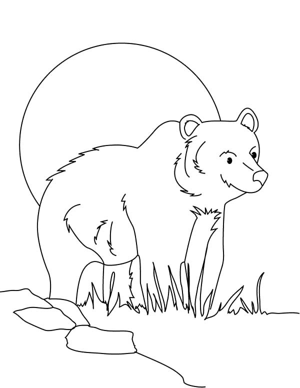 600x776 Brown Bear Sneaking Behind Grass Coloring Pages Best Place To Color