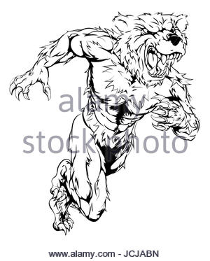300x373 Cartoon Brown Bear. Grizzly Bear And Brown Bear Isolated, Vector